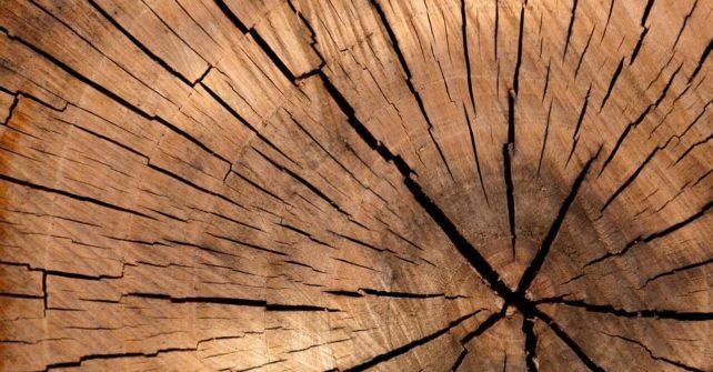 Premeny dreva- Mário Furčák